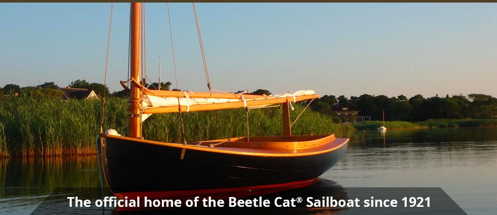 banner1-beetlecat